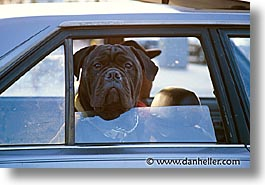 animals, ca, canine, cars, dogs, horizontal, san francisco, windows, photograph