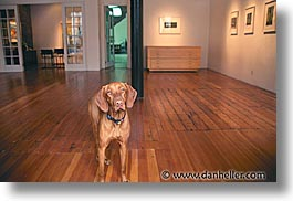 animals, canine, dogs, gallery, horizontal, photograph