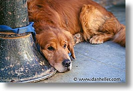 animals, ca, canine, dogs, horizontal, lampost, love, san francisco, photograph