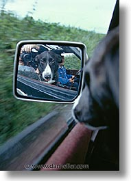 animals, canine, dogs, ireland, rearview, terryglass, vertical, photograph