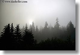 alaska, america, fog, horizontal, north america, trees, united states, photograph