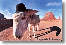 america, arizona, desert southwest, horizontal, monument, monument valley, mules, north america, united states, valley, western usa, photograph