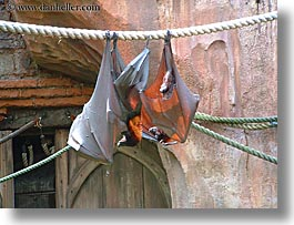 america, animal kingdom, disney, florida, flying, fox, giants, horizontal, north america, orlando, united states, photograph