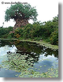 america, animal kingdom, disney, florida, jungle, north america, orlando, rivers, united states, vertical, photograph