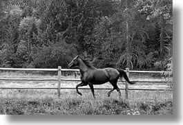 america, animals, black and white, fences, horizontal, horses, idaho, nature, north america, plants, red horse mountain ranch, structures, trees, united states, photograph