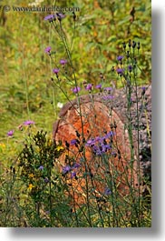america, idaho, logs, north america, red horse mountain ranch, united states, vertical, wildflowers, photograph