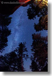 america, fisheye lens, idaho, long exposure, milky, north america, red horse mountain ranch, scenics, trees, united states, vertical, way, photograph