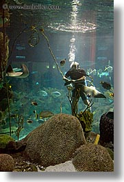 america, aquarium, chicago, diver, illinois, north america, scuba diver, united states, vertical, water, photograph