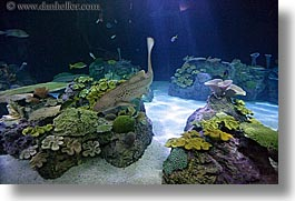 america, aquarium, chicago, horizontal, illinois, north america, sharks, united states, water, photograph