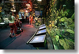 america, aquarium, chicago, horizontal, illinois, north america, strolling, united states, photograph