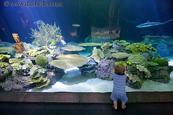 Aquarium for sale chicago baby sharks for sale aquarium for Baby sharks for fish tanks