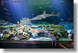 america, aquarium, babies, chicago, fish, horizontal, illinois, north america, sharks, united states, viewing, water, photograph