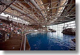 america, aquarium, arena, chicago, dolphins, horizontal, illinois, north america, slow exposure, tanks, united states, water, photograph