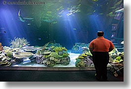 america, aquarium, chicago, fish, horizontal, illinois, men, north america, people, united states, viewing, water, photograph