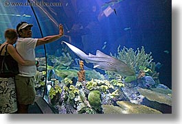 america, aquarium, chicago, couples, fish, horizontal, illinois, north america, people, united states, viewing, water, photograph