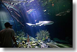 america, aquarium, chicago, fish, horizontal, illinois, north america, people, united states, viewing, water, photograph