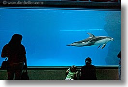 america, aquarium, chicago, fish, horizontal, illinois, north america, people, silhouettes, united states, viewing, water, photograph