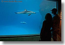 america, aquarium, chicago, couples, fish, horizontal, illinois, north america, people, silhouettes, united states, viewing, water, photograph