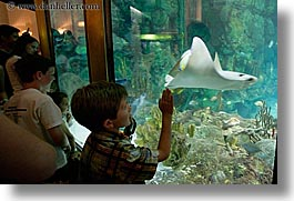 america, aquarium, chicago, childrens, fish, horizontal, illinois, north america, people, united states, viewing, water, photograph