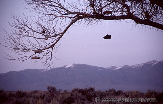 Tree Shoes Nevada Shoe Tree Nevada Highway 50