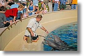america, animals, casino, dolphins, feeding, horizontal, hotels, las vegas, mirage, nevada, north america, the strip, united states, western usa, photograph