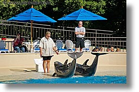 america, animals, casino, dolphins, horizontal, hotels, las vegas, mirage, nevada, north america, the strip, training, united states, western usa, photograph