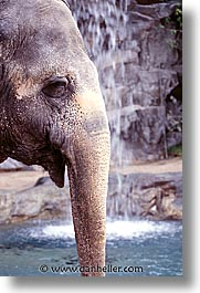america, animals, casino, elephants, hotels, las vegas, mirage, nevada, north america, the strip, united states, vertical, western usa, photograph