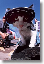 america, cats, desert southwest, indian country, new mexico, north america, patriots, santa fe, southwest, united states, vertical, western usa, photograph