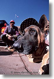 america, desert southwest, dogs, indian country, new mexico, north america, patriots, santa fe, southwest, united states, vertical, western usa, photograph