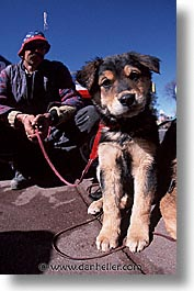 america, desert southwest, hound, indian country, new mexico, north america, puppies, santa fe, southwest, united states, vertical, western usa, photograph