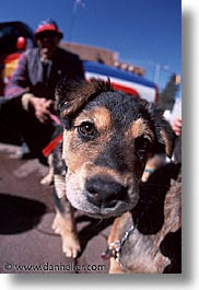 america, desert southwest, indian country, new mexico, north america, puppies, santa fe, sniff, southwest, united states, vertical, western usa, photograph