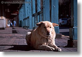 america, desert southwest, dogs, horizontal, indian country, new mexico, north america, santa fe, sidewalks, southwest, united states, western usa, photograph