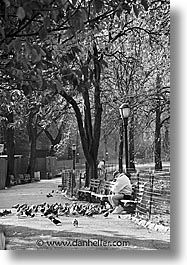 america, benches, black and white, central park, new york, new york city, north america, park, united states, vertical, photograph