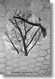 america, black and white, central park, new york, new york city, north america, puddle, reflect, trees, united states, vertical, photograph