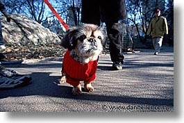 america, central park, horizontal, new york, new york city, north america, red, sweater, united states, photograph