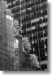 america, black and white, buildings, new york, new york city, north america, trees, united states, vertical, photograph