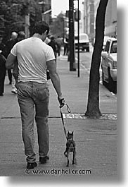 america, mansbestfriend, new york, new york city, north america, streets, united states, vertical, photograph