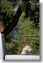 america, baker city, dogs, eared, long, north america, oregon, united states, vertical, photograph