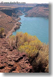 america, bill chinook, cove palisades, lakes, nature, north america, oregon, plants, shrubs, united states, vertical, photograph