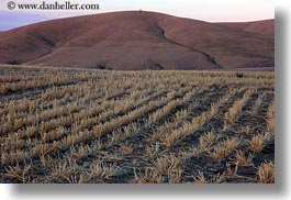 agriculture, america, horizontal, landscapes, north america, oregon, rows, scenics, united states, photograph
