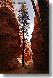 america, bryce canyon, canyons, north america, trees, united states, utah, vertical, western usa, photograph