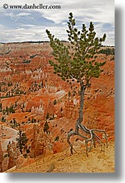 america, bryce canyon, north america, scenics, trees, united states, utah, vertical, western usa, photograph