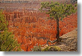 america, bryce canyon, horizontal, north america, scenics, trees, united states, utah, western usa, photograph