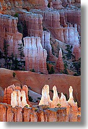 america, bryce canyon, glowing, north america, towers, united states, utah, vertical, western usa, photograph