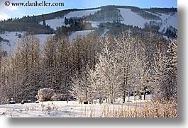 america, aspen trees, aspens, horizontal, north america, park city, snow, united states, utah, western usa, photograph