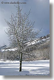 america, aspen trees, aspens, north america, park city, snow, united states, utah, vertical, western usa, photograph