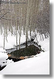 america, aspen trees, north america, park city, rivers, snow, trees, united states, utah, vertical, western usa, photograph