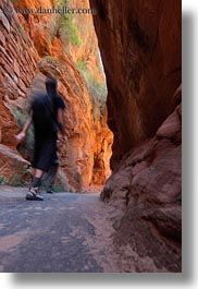 america, angels landing trail, canyons, hikers, nature, north america, paths, rocks, slot canyon, slow exposure, trees, united states, utah, vertical, walls, western usa, zion, photograph