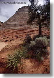 america, growing, north america, plants, rocks, united states, utah, vertical, western usa, zion, photograph