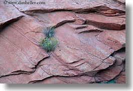 america, growing, horizontal, north america, plants, rocks, united states, utah, western usa, zion, photograph